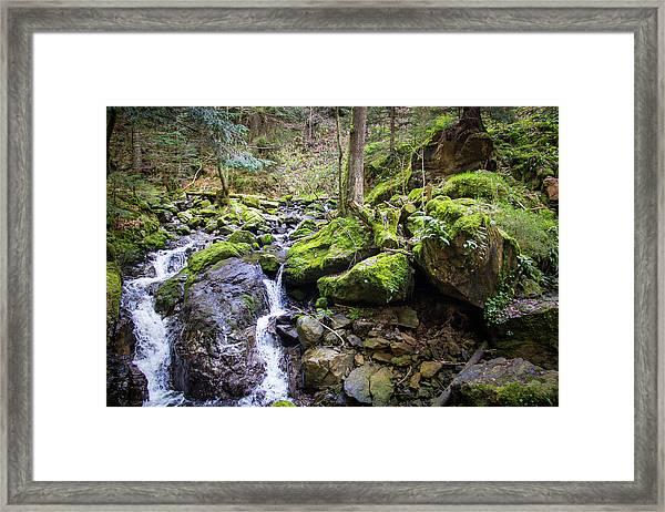 Vivid Green In The Black Forest Framed Print