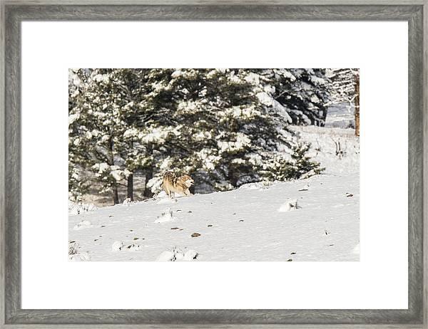 W14 Framed Print