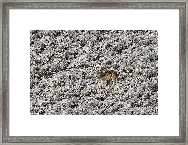 W17 Framed Print