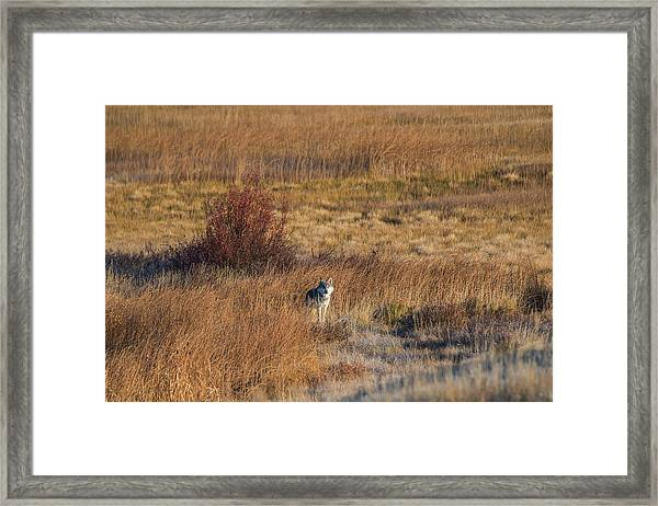 W2 Framed Print