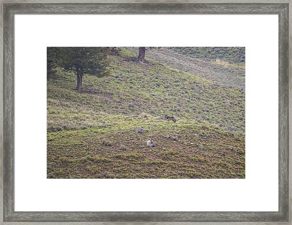 W25 Framed Print