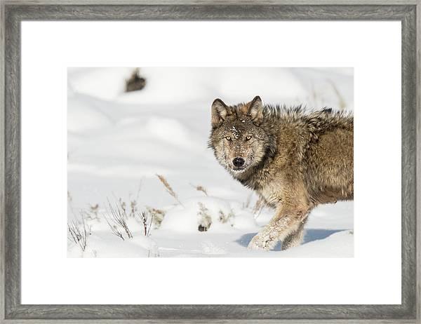 W35 Framed Print