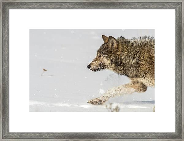 W36 Framed Print