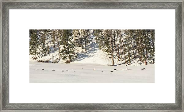 W48 Framed Print
