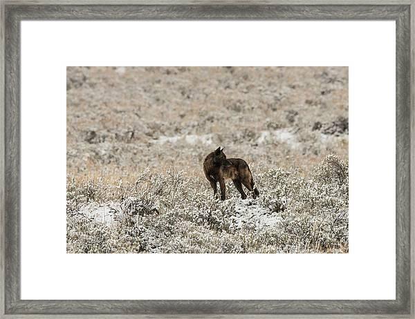 W49 Framed Print