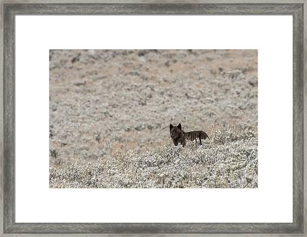 W50 Framed Print