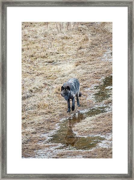 W51 Framed Print