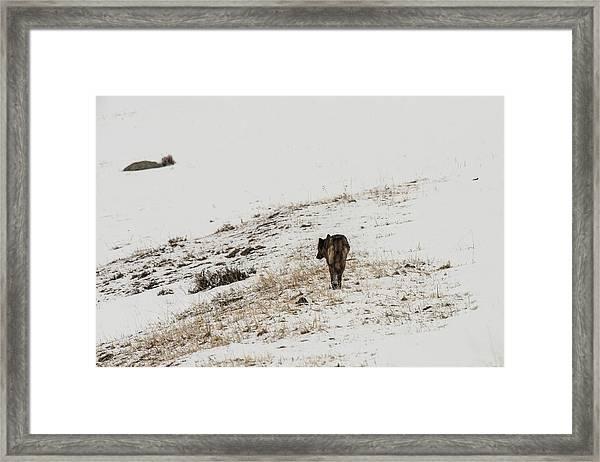 W52 Framed Print