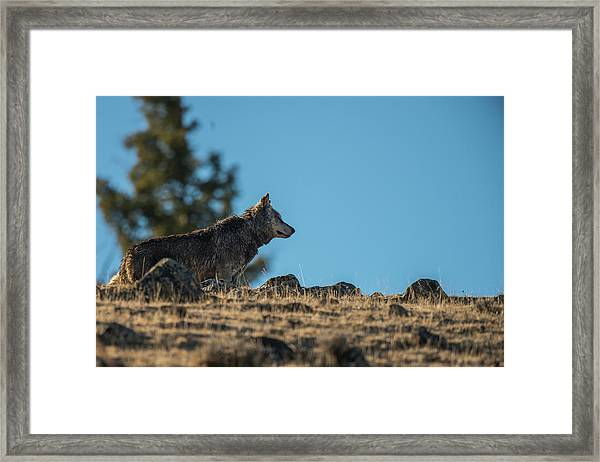 Framed Print featuring the photograph W61 by Joshua Able's Wildlife