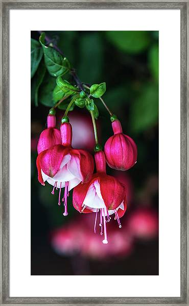 Wallpaper Flower Framed Print