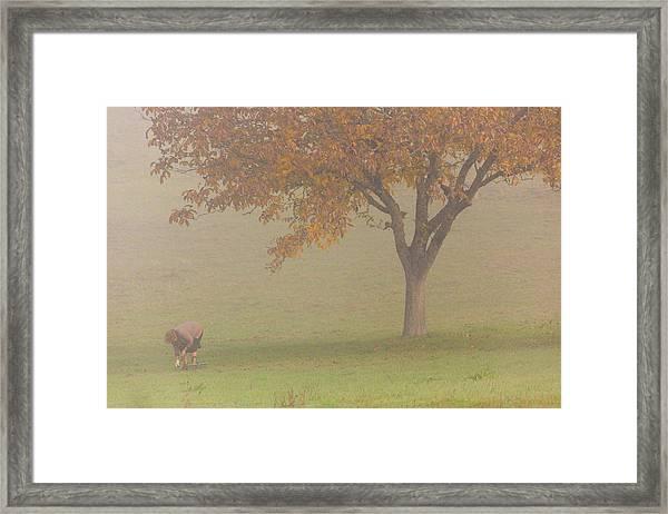 Walnut Farmer, Beynac, France Framed Print