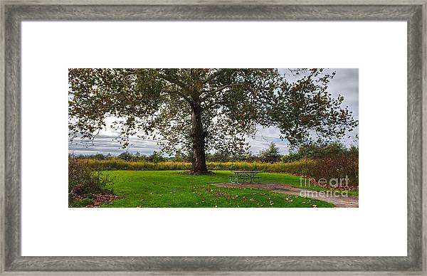 Walnut Woods Tree - 1 Framed Print