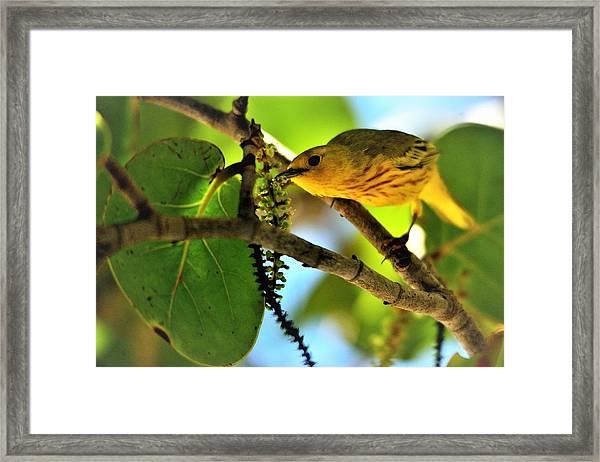Warbler's Delight Framed Print