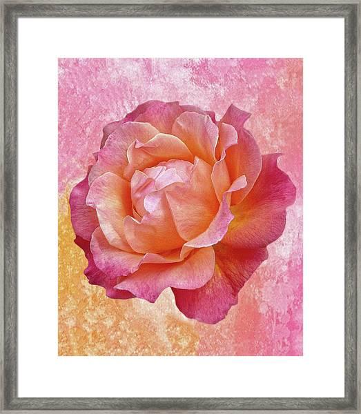 Warm And Crunchy Rose Framed Print