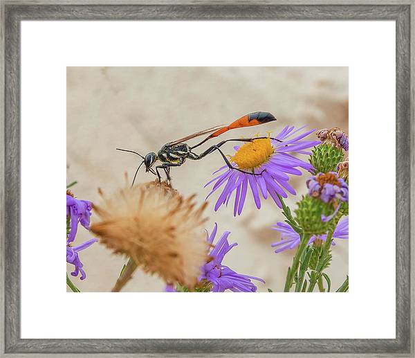 Wasp At White Sands Framed Print