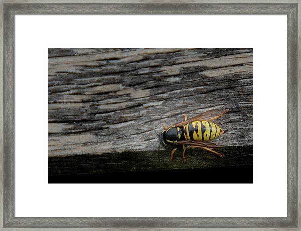 Wasp On Wood Framed Print