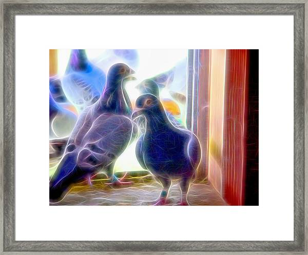 Watchful Homing Pigeons Fibers Framed Print