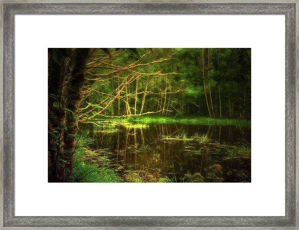 Framed Print featuring the photograph Water Nymph Habitat by Dee Browning