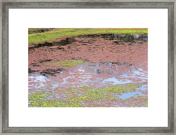 Water Reflection Svrp_1108_18 Framed Print