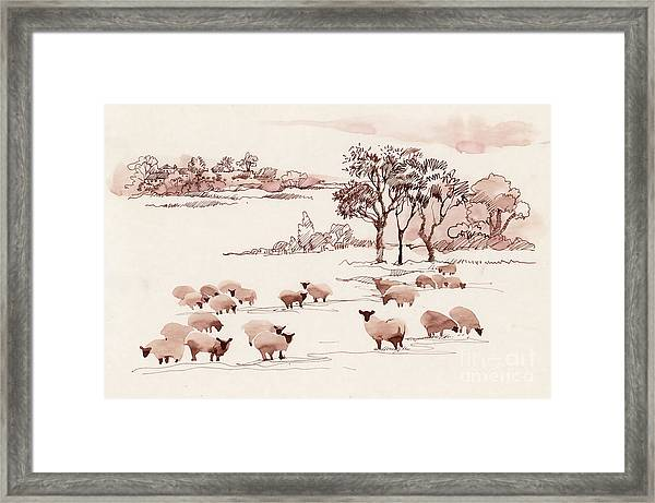 Watercolor Summer Landscape With Sheep Framed Print