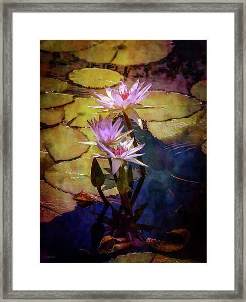 Waterlily Bouquet 2922 Idp_6 Framed Print