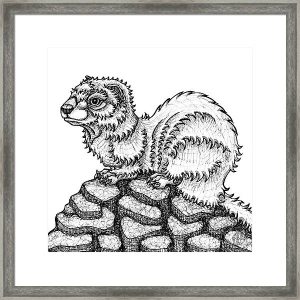 Framed Print featuring the drawing Weasel by Amy E Fraser