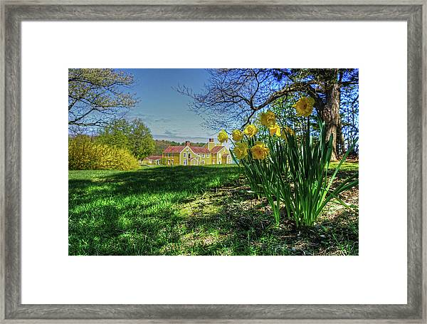 Wentworth Daffodils Framed Print