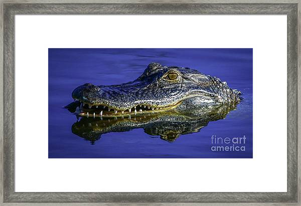 Framed Print featuring the photograph Wetlands Gator Close-up by Tom Claud