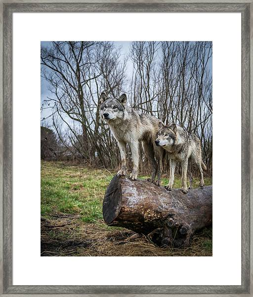 What Ya Looking At Framed Print