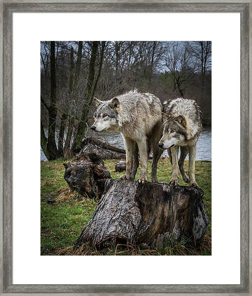 What Ya Think Framed Print