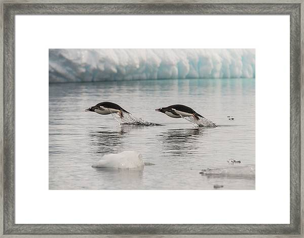 When Penguins Fly Framed Print