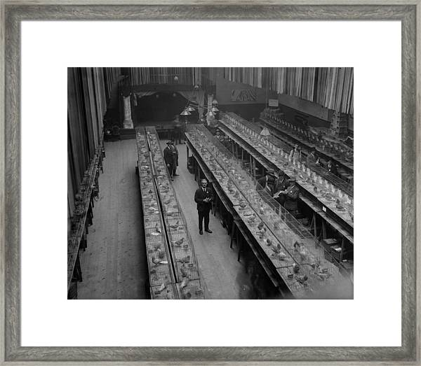 Which Pigeon Framed Print
