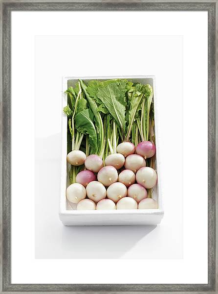 White Baby Turnips In Tray Framed Print