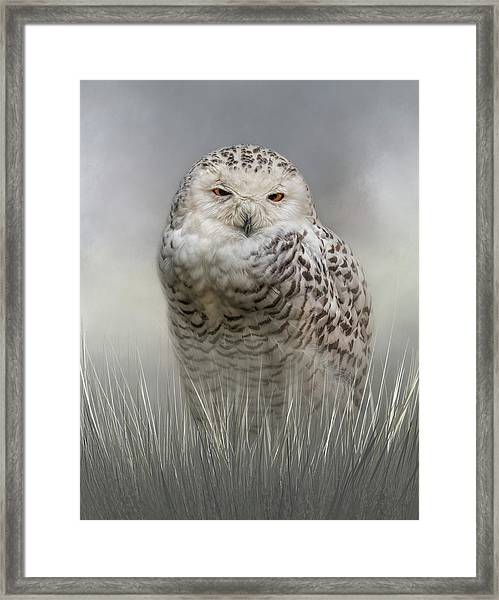 White Beauty In The Field Framed Print