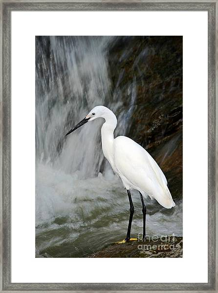 White Bird With Waterfall. Heron In The Framed Print by Ondrej Prosicky