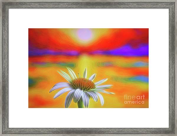 White Coneflower 2 Framed Print