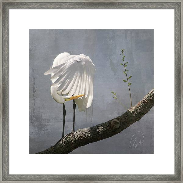 White Egret Framed Print