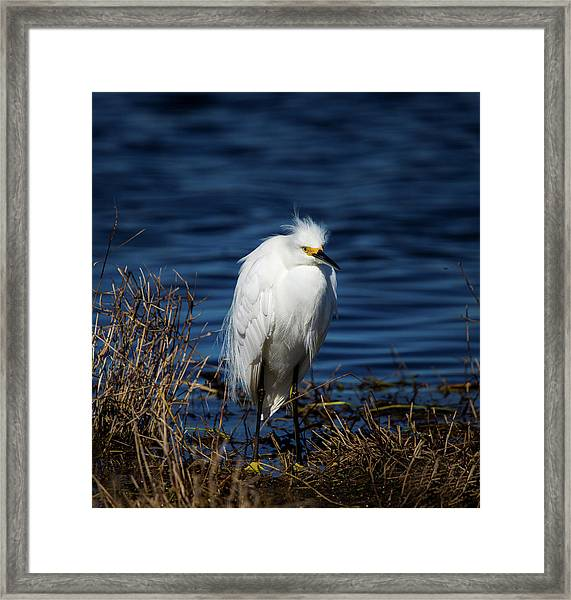 White Egret Framed Print