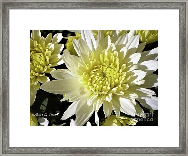 White Flowers W8 Framed Print