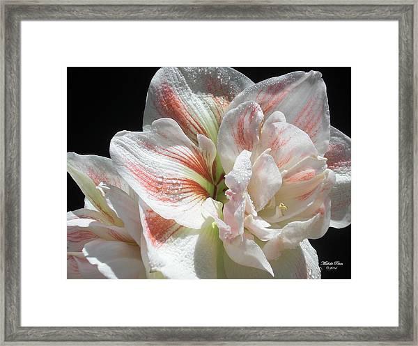 White Glory Framed Print