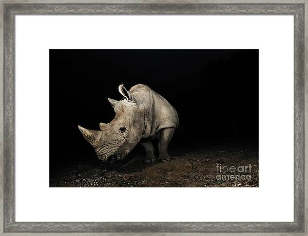 White Rhinoceros Framed Print by Signature Message