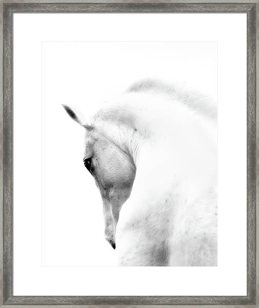 White Stallion Andalusian Horse Neck Framed Print