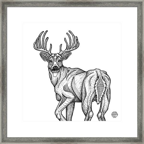 Framed Print featuring the drawing White Tailed Buck by Amy E Fraser