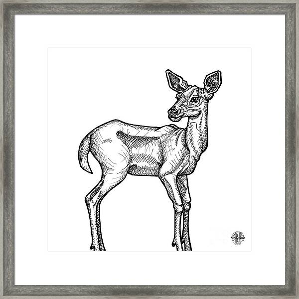 Framed Print featuring the drawing White Tailed Doe by Amy E Fraser