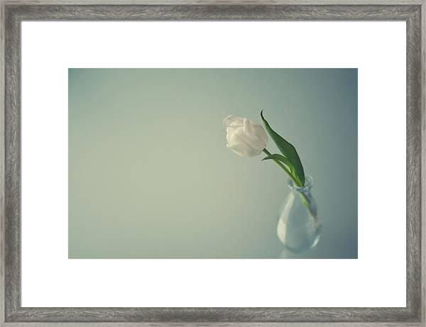 White Tulip In Small Glass Vase Framed Print