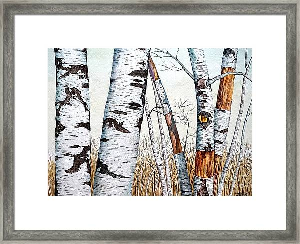 Wild Birch Trees In The Forest In Watercolor Framed Print
