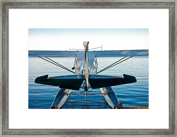 Wild Blue Framed Print