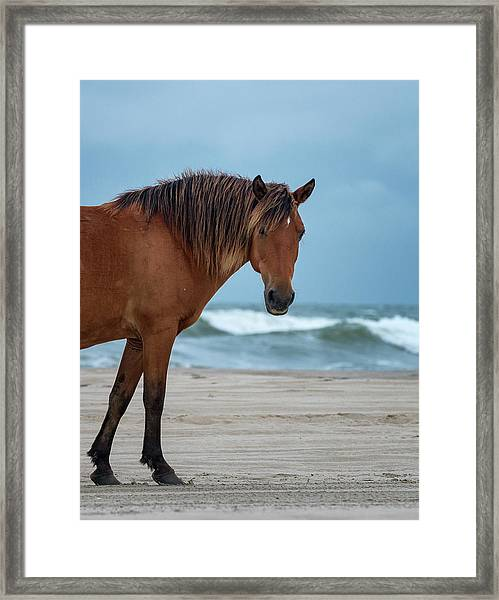 Wild Colonial Spanish Mustang Of Carova Stormy Skies Framed Print