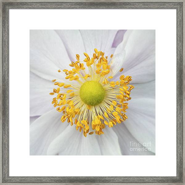 Wild Flower Stamens Covered With Pollen Framed Print