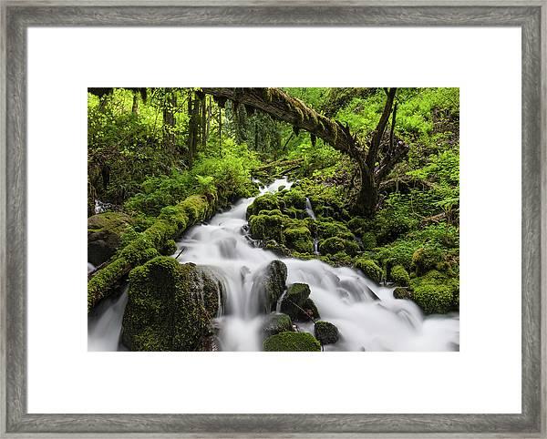 Wild Forest Waterfall Idyllic Green Framed Print